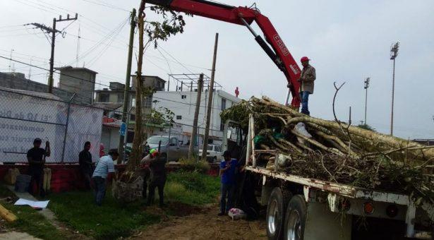 Iniciaron primera etapa de reforestación en la Unidad Deportiva de Tuxtepec