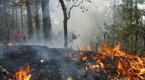 Atiende Coesfo incendios forestales en la entidad